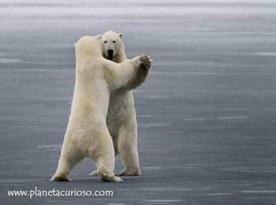 era un oso de peluche que sonaba con ser un oso de verdad y un oso ...